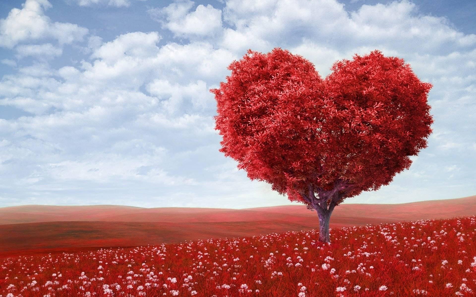 Você já ouviu falar sobre os 5 Pilares do Amor Evolutivo?